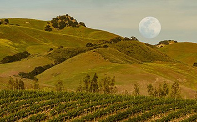 Winemaker Dinner Under the Full Moon